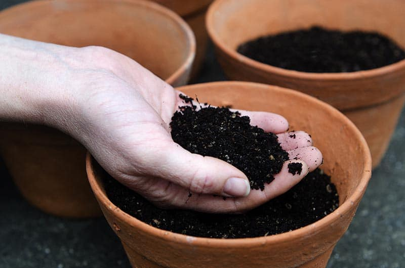 Create a vegetable garden by finding the best soil to grow the plants.