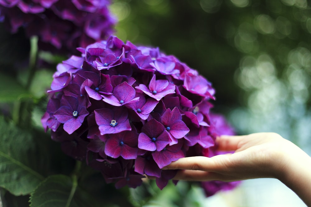 Colorful Hydrangea Flower Bouquets To Liven Up Your Day